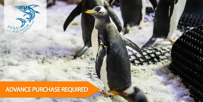 Includes access to the Penguin Cove!