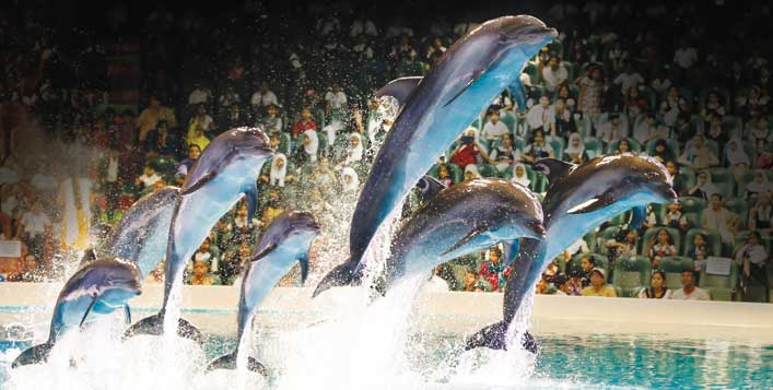 Dolphin and Seal Shows for adults & children