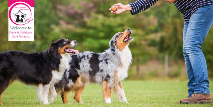 Obedience or toilet training for dogs
