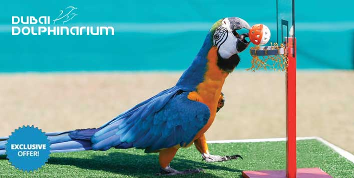 Dubai Dolphinarium Exotic Bird Show Tickets