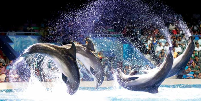 Dolphin and Seal Shows for adults & kids
