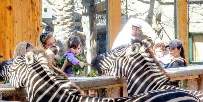 Half-board weekend with Zoo entry tickets