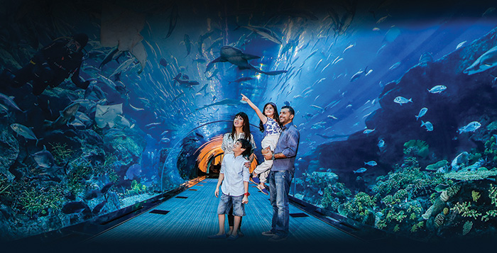 Dubai City Tour + Dubai Aquarium Ticket